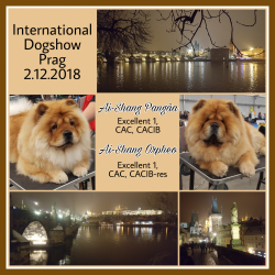 International Dogshow in Prag / CZ