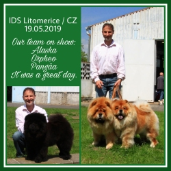 International Dog Show in Litomerice